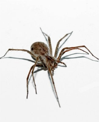 How To Get Rid Of Spiders Bob Vila