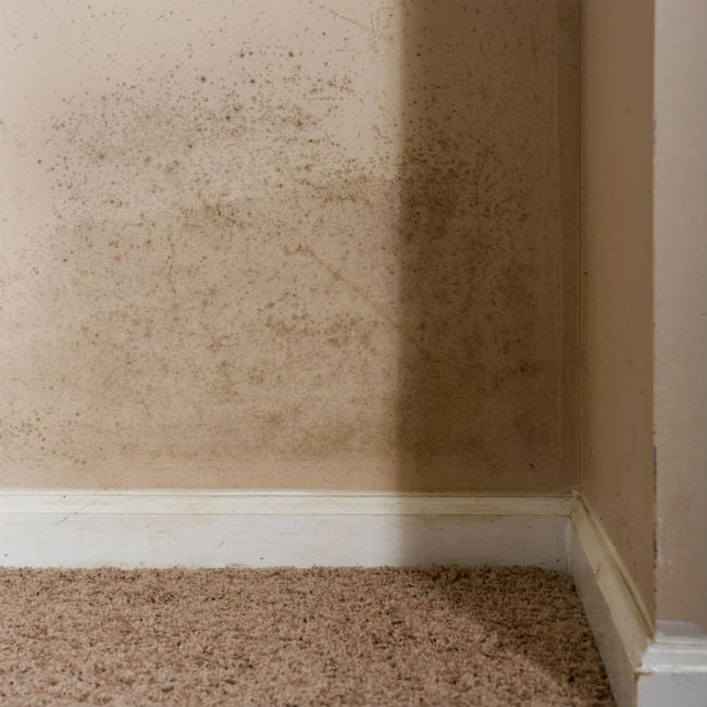 Mold On The Walls How To Kill It And Clean Up The Stains Bob Vila