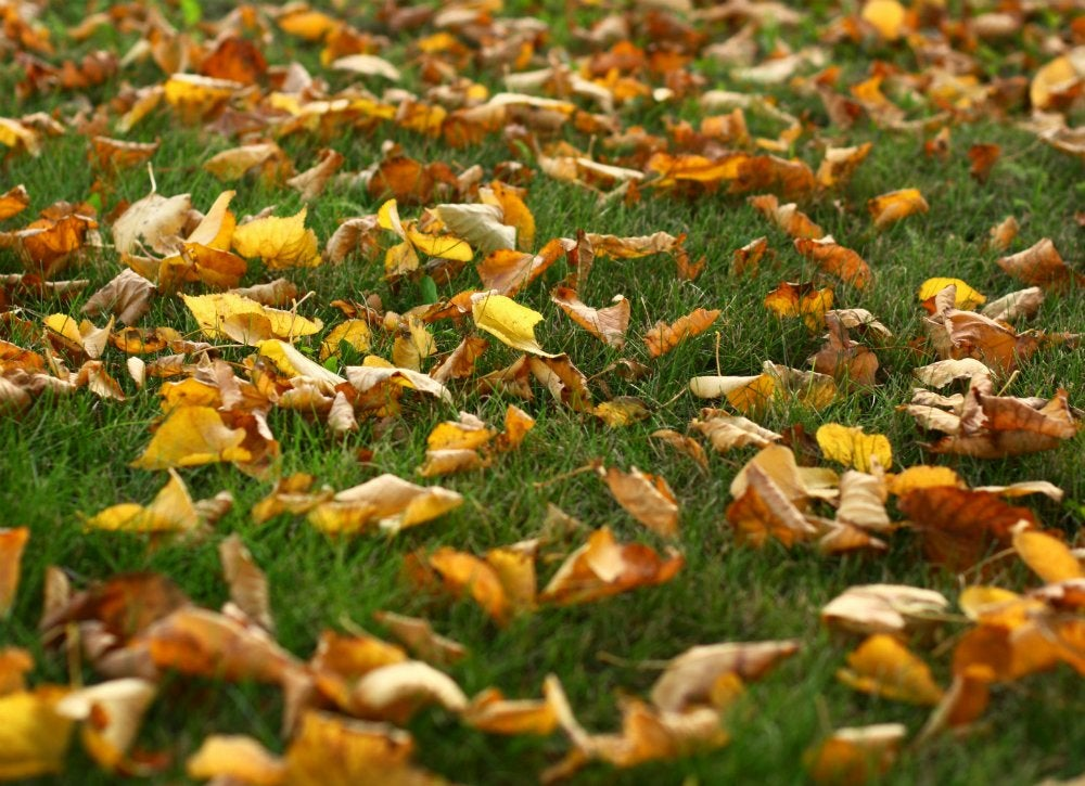 Does Mulching Leaves Harm Lawn