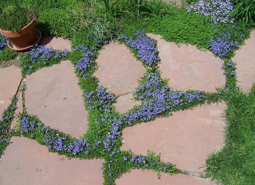 Ground Cover - Backyard Landscape Ideas - 8 Lawn-Less ... on Backyard Landscaping Ideas No Grass  id=63628