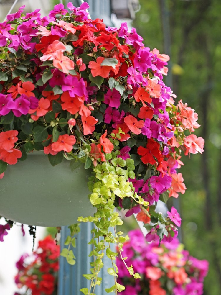 Large Colorful Outdoor Pots