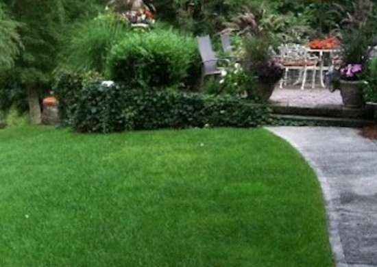No Mow Grass Mix - Lawn Alternatives - 10 Ways to Keep Off ... on No Mow Backyard Ideas id=46590