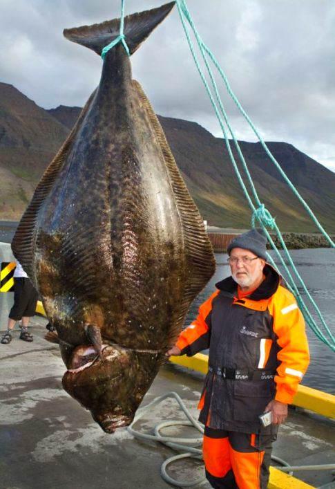 monster-halibut