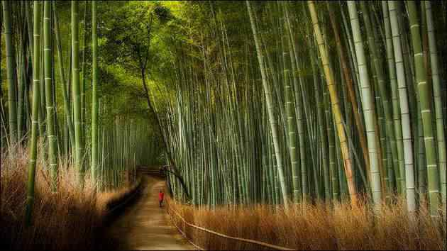 Beautiful-Bamboo-Forests-In-Japan1