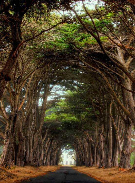 Point-Reyes-National-Seashore-California-1