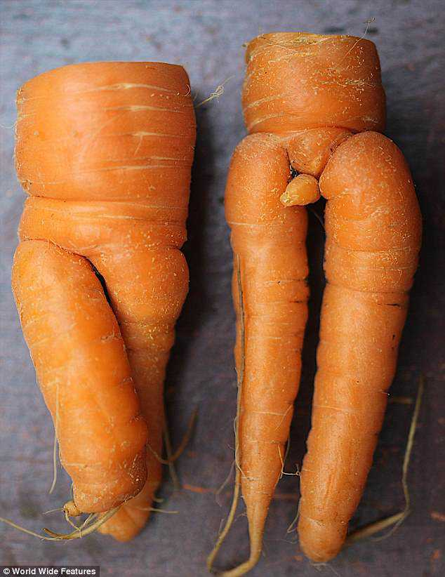 mr-and-mrs-carrot