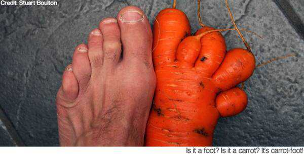 pictures-of-funny-vegetables-9