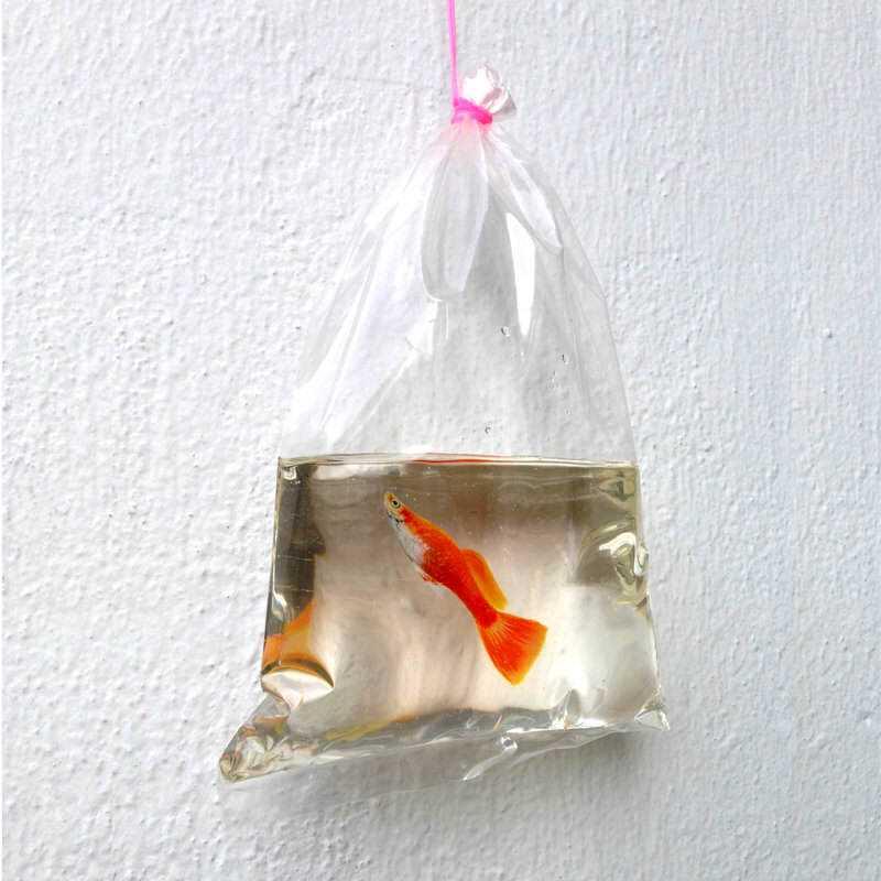 takeaway_fish_by_kenglye-d7253dx