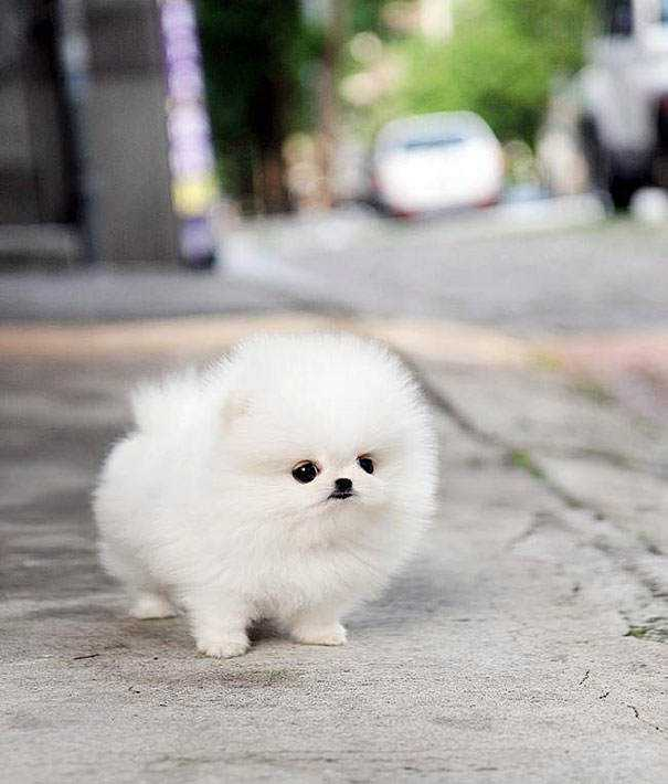 cute-fluffy-animals-203