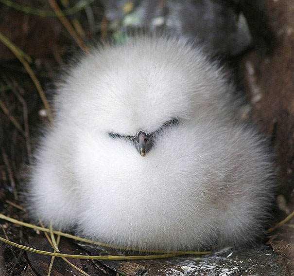cute-fluffy-animals-253