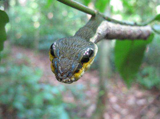 sanke-caterpillar-tours