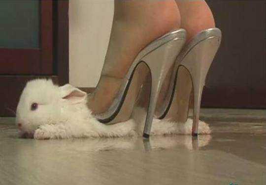 Nem sempre são gatos, às vezes são pintinhos, coelhinhos, e etc...