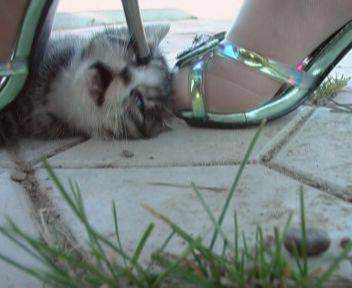 Depois ela pisa de salto alto na cabeça do gatinho até estourá-la