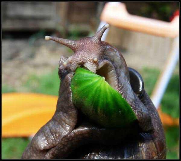 giant_snails_17-600x535