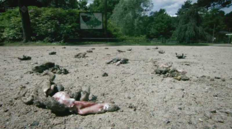 scale_BBC.Natures.Weirdest.Events.1of2.PDTV_.XviD_.AC3_.MVGroup.org07-24-03