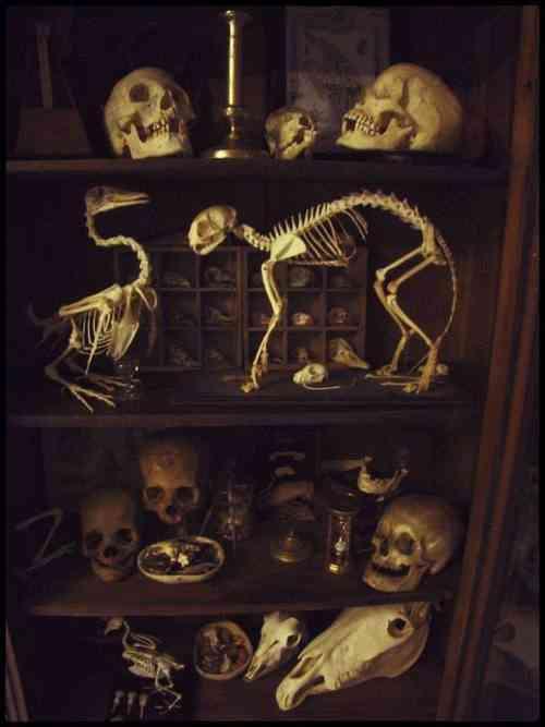 Um gabinete de curiosidades clássico