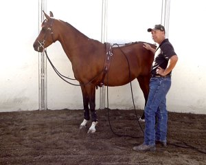 For the Horse: Long Lining Videos