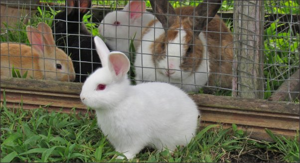 Rabbit Farming and Management