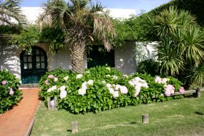 Jose Ignacio plants