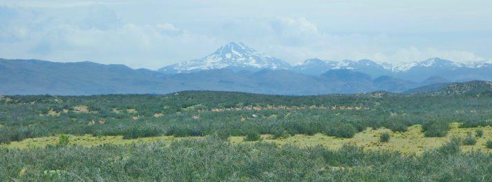 Torres del Paine National Park guanaco herd