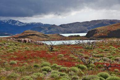 Torres del Paine National Park bushes