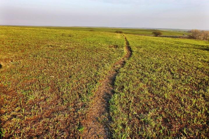 Tallgrass Prairie previously burned fields