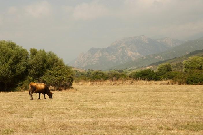 Domaine de Murtoli fields