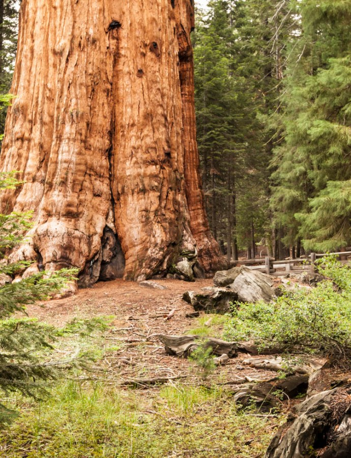 Discover the World's Largest Tree at Sequoia National Park, CA