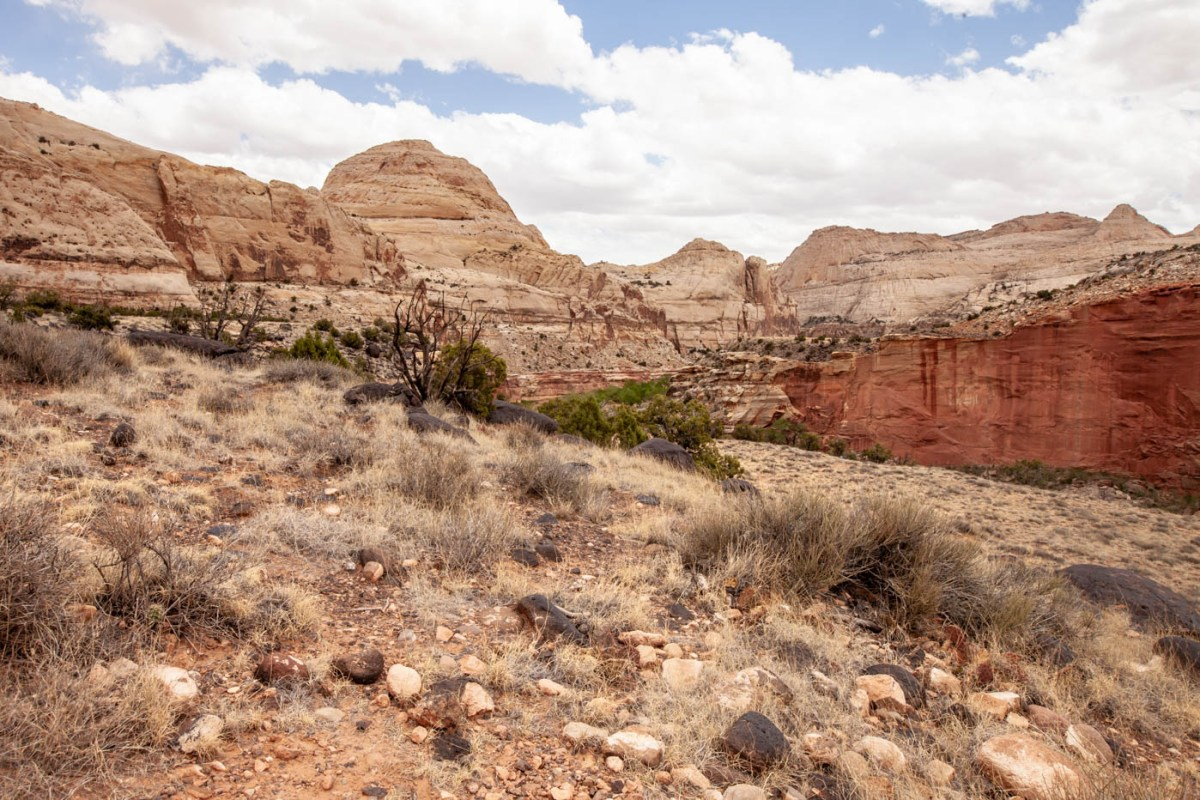 Capitol Dome on the hike to Hickman Natural Bridge at Capitol Reef National Park #vezzaniphotography