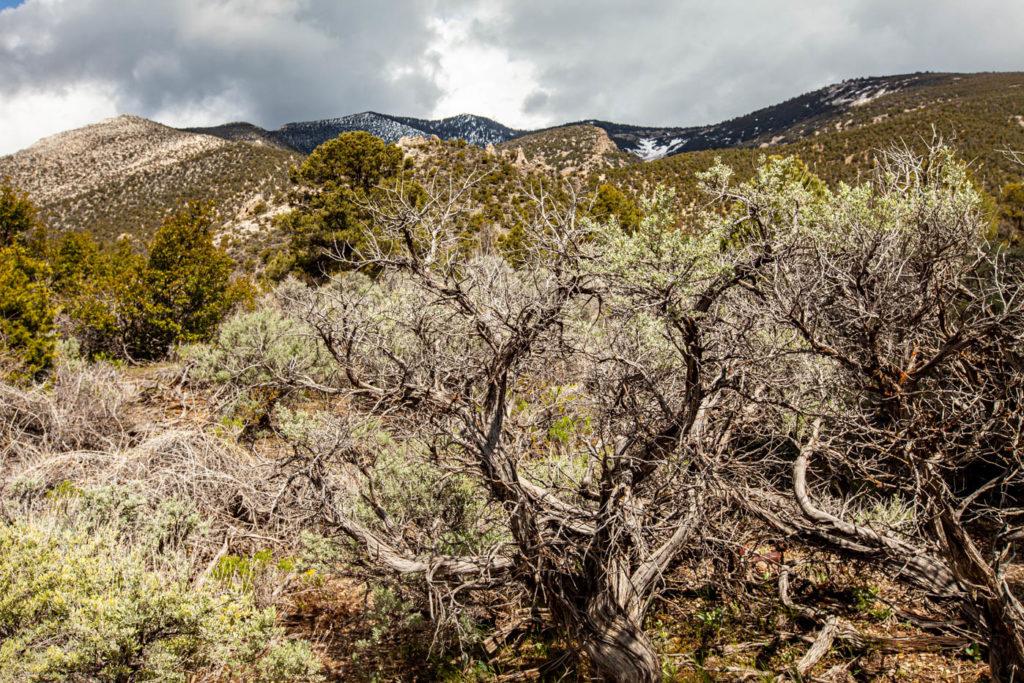 Snake Creek Road Great Basin National Park
