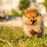 103 Names Perfect For Fluffy Dogs Cuteness