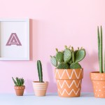 How To Root Cactus