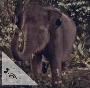 Disney-Elephants-42