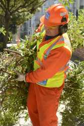 A San Francisco Public Works crew member carries clipped tree branches toward a chipper at a tree maintenance program launch in Noe Valley in San Francisco, Calif. on Wednesday, July 19, 2017.