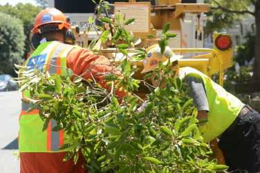 San Francisco Public Works crew members shove tree branches into a chipper at a tree maintenance program launch in Noe Valley in San Francisco, Calif. on Wednesday, July 19, 2017.