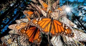 """Abren al público los Santuarios de la Mariposa """"Monarca"""""""