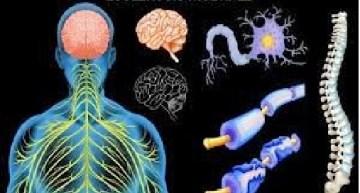 Necesario crear conciencia de enfermedades como la esclerosis múltiple