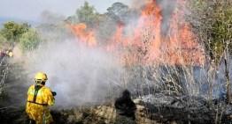 Grupos de auxilio sofocan incendio en la Sierra de Tócuaro y Ucareo