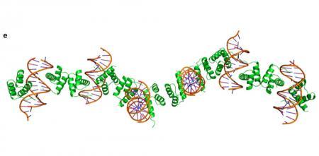 Protein Studies | sciencesprings | Page 2