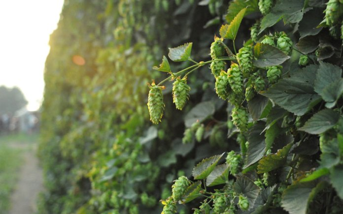 Brewers Association Awards 2019 Research Grants