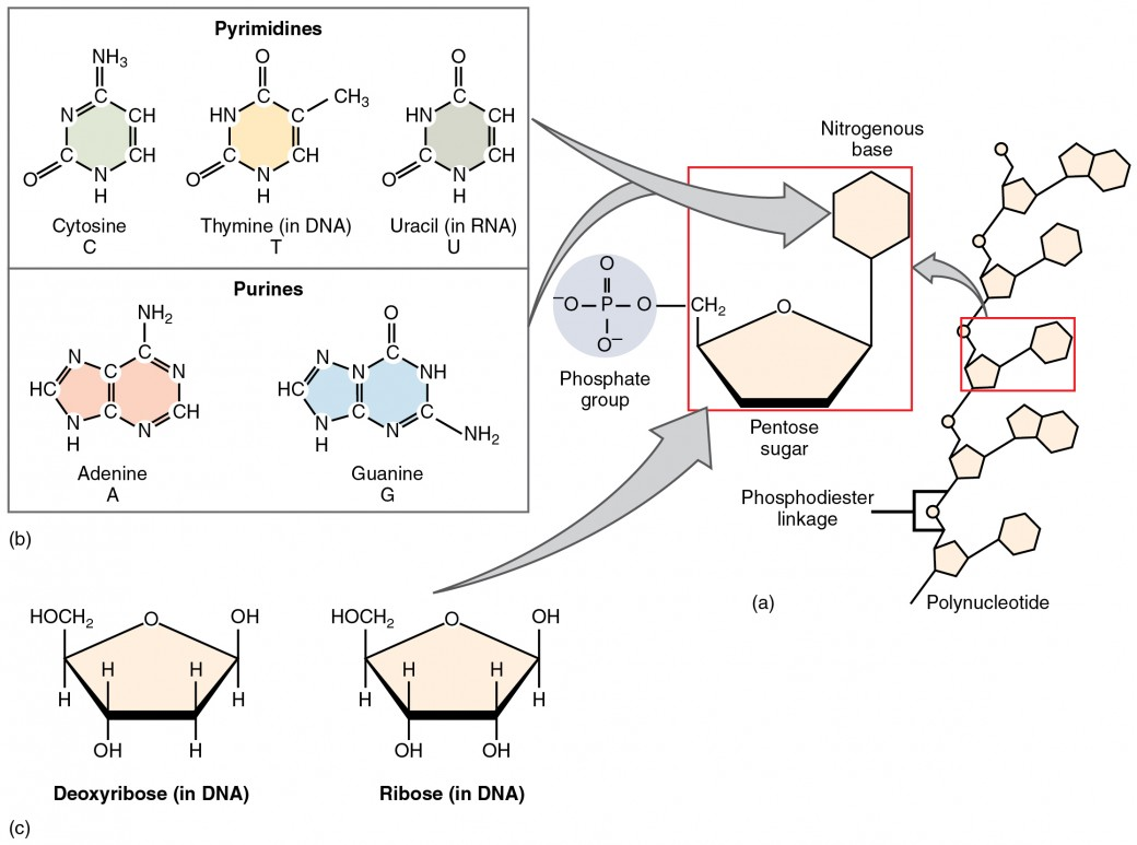 Organic Compounds Essential To Human Functioning