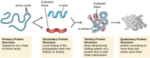 Proteins | Microbiology