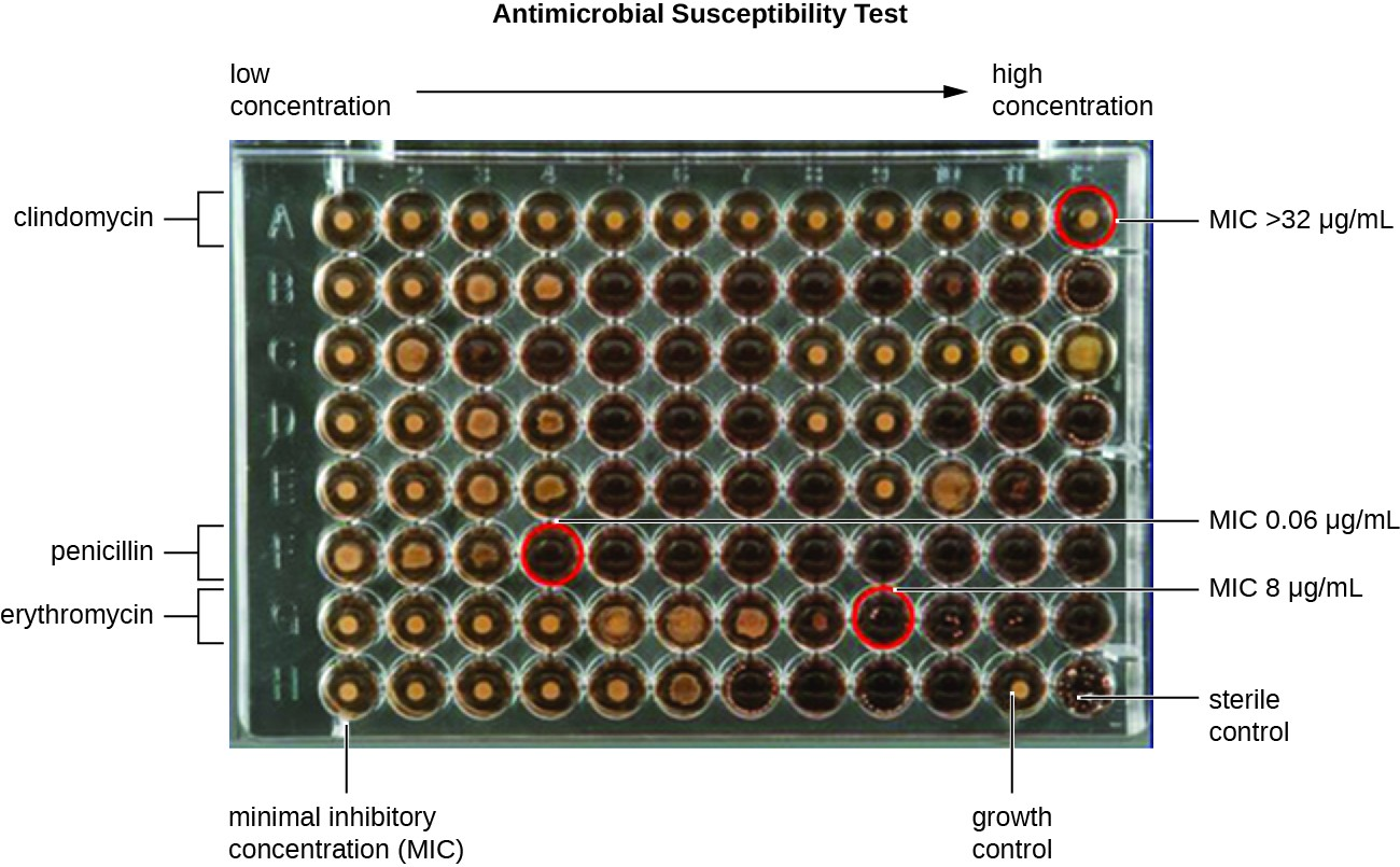 Testing The Effectiveness Of Antimicrobials