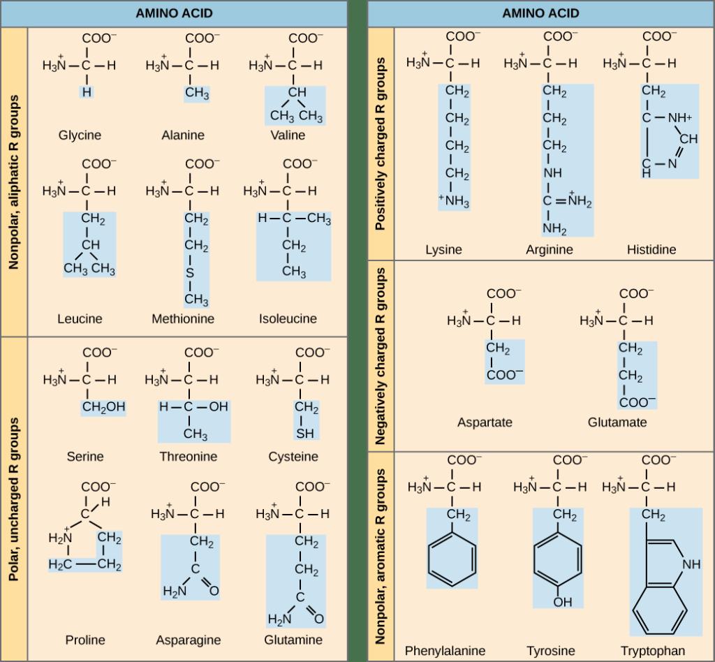 Reading Amino Acids