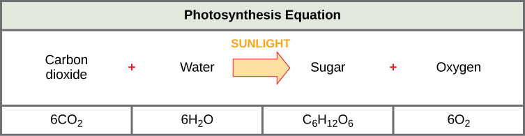 Reading Introduction to Photosynthesis Biology Early