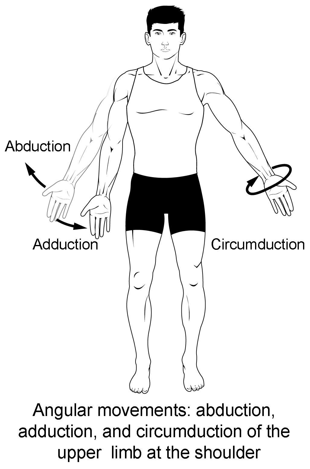 Metacarpal Labeling Worksheet