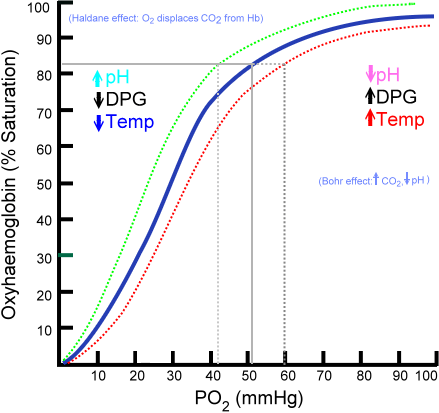 This line graph shows PO2 on the X-axis and oxyhemoglobin on the Y access. The lines indicate that the oxygen saturation curve is S-shaped as a result of the cooperative binding process described in the previous paragraph.