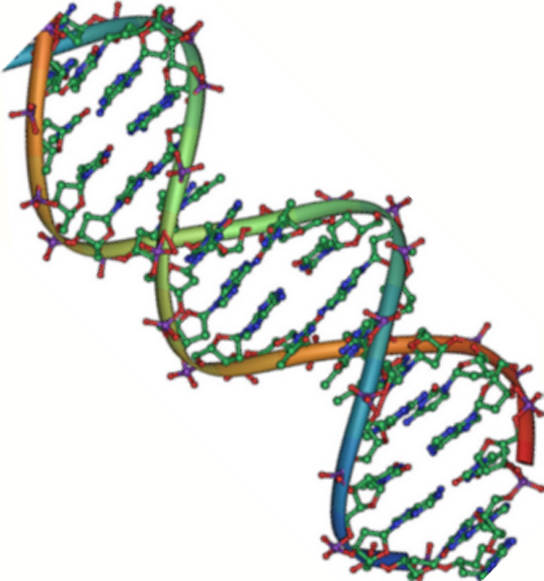 The DNA Double Helix | Introduction to Chemistry