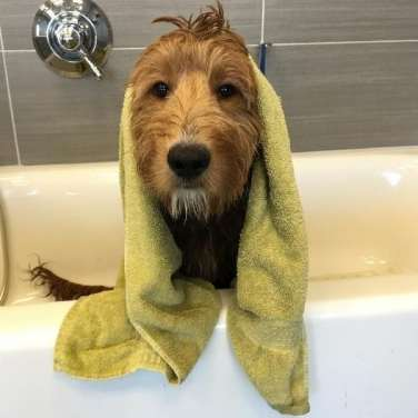 5 Tips to Help Keep Your Dog Dry This Spring