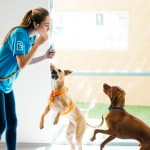 Prepping Your Dog for Doggie Daycare